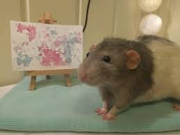 """New """"Rodents Revealed"""" Project Exposes Just How Talented Mice and Rats Truly Are"""